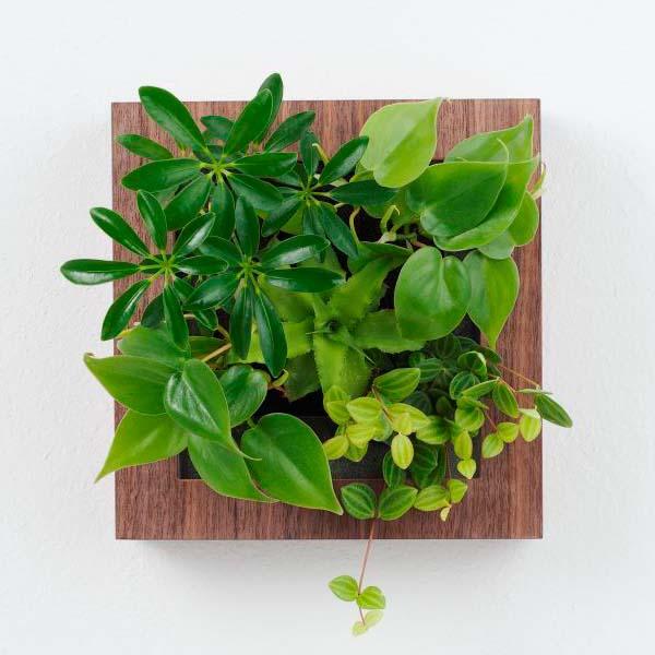 おしゃれな緑のインテリア!壁に飾る植物のプレゼント