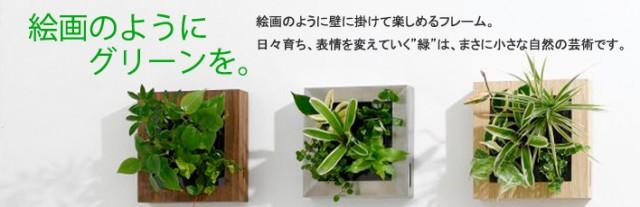 midori-kaiga02